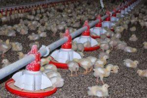 Новая научная статья призывает к прекращению глобального животноводства для предотвращения пандемий, подобных COVID-19