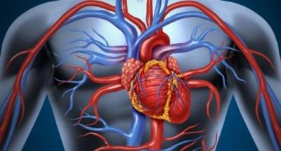 Удивительные сигналы, которые подает организм при проблемах с сердцем