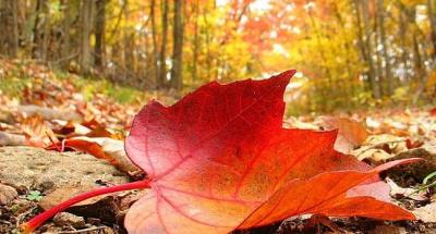 Опавшие осенние листья таят угрозу для здоровья